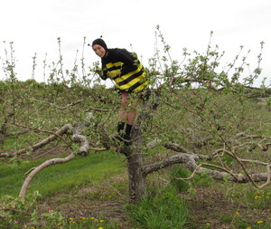Becky Bee up a tree 2
